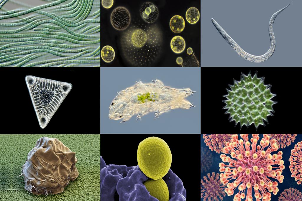 Destroys viruses, bacteria, microbes