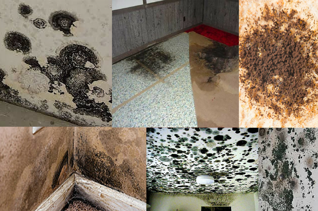 Destroys Mold and Mildew